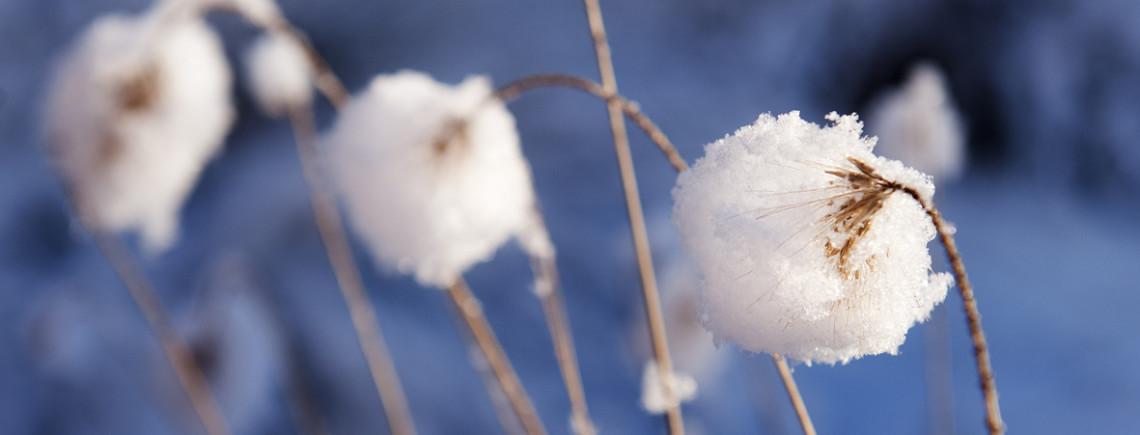 winter favorieten